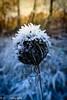 warm und kalt / warm and cold (R.O. - Fotografie) Tags: warm kalt cold winter closeup close up natur nature outdoor ice eis frost panasonic lumix dmcfz1000 dmc fz1000 fz 1000