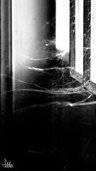 Urban Selection (Ukelens) Tags: ukelens schweiz swiss switzerland suisse svizzera schwarzundweiss schwarzweiss blackandwhite urban street streetphotography spiderweb spinnennetz licht lichter lichteffekt lichteffekte lightroom light lights lighteffects lighteffect shadow shadows contrast kontrast