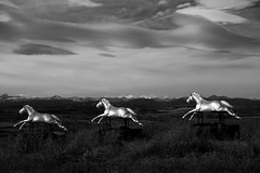 Horses (jan lyall) Tags: horses horse art leightoncenterartgallery alberta foothills mountains rockymountains clouds canada prairie sky chinook carouselhorses
