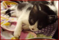 Mimoso (terryisaza) Tags: animales felinos fotografia cats cariosos gatos gata cachorros