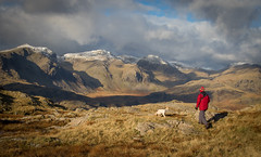 The Best Dog Walk in the Country? (DP the snapper) Tags: borderend turbo scafell lakedistrict eskdalevalley cockapoo
