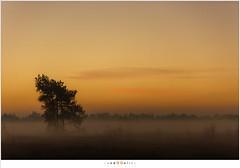 Morning Twilight (nandOOnline) Tags: morning nature dauw landscape koud december landschap natuur ochtend mist schemering twilight nevel strabrecht vorst sunrise cold fog strabrechtseheide zonsopkomst frost mierlo nbrabant nederland