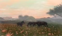 aprs l'orage  Tyr Aman (Leinjan Aries) Tags: landscape virtual secondlife sky horses nature