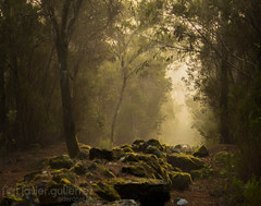Into the Forest (gjaviergutierrezb) Tags: forest tree trees fog light