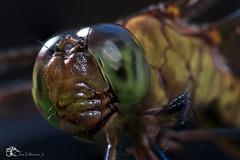 dragonfly (oscarmachaconjr) Tags: teampilipinas litratistakami ih fun