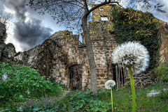 Dandelion (Rickydavid) Tags: cellenoantica ancient oldcity hdr
