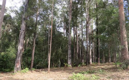 Lot 24 Koala Close, Valla NSW