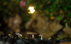 IMG_1912 (::Lens a Lot::) Tags: paris | 2016 carl zeiss jena tessar red t 50mm f28 q1 1954 12 blades iris m42 flower plant bokeh depth field closeup color blossom vintage manual ddr east german germany classic fixed prime lens drop rain water extérieur fleur plante profondeur de champ night light pink purple green mushroom effet flou