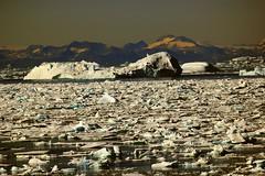 Greenland Ice Field (sobergeorge) Tags: sobergeorge bysobergeorge passingiceberg greenlandiceberg largeiceberg iceberg vov2015 passingby manyicebergs voyageofthevikings msveendam deepnorth icefield greenlandicefield