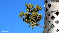 In the sky (patrick_milan) Tags: sky ciel blue bleu geometric minimalism roof