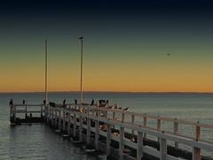 Evening at the beach (Ostseeleuchte) Tags: beach strand abendlicht eveninglight sunset birds vgel mwen kormorane greatcormorant seagulls ostsee balticsea grmitz germany deutschland