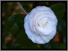 Toowoomba Flowers-007=