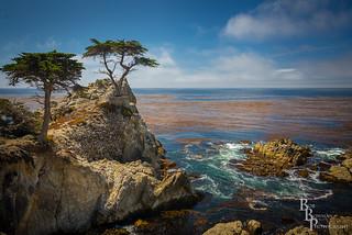 Lone Cypress-Pebble Beach