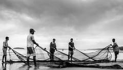Fishing without a pole (Viswas Nair TK) Tags: india fish net beach fishing nikon fishermen cloudy south karnataka karwar d90 18105mm