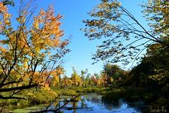 (Sarah-Vie) Tags: autumn nature automne lac paysage 0002 dsc fort parcoka