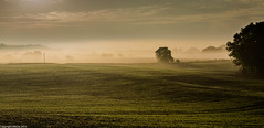 Green shoots, on a misty day. (AlbOst) Tags: morning trees misty fields newshoots theworldwelivein