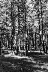 shade (Thomas Skov) Tags: travel arizona usa landscape outdoor grandcanyon roadtrip event zm lenstagger leicam9 biogont235