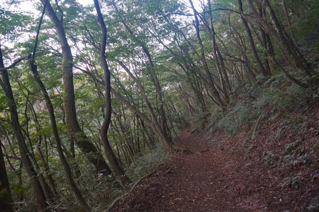 鋸山~大岳山~御岳山3