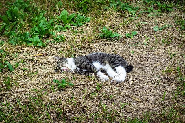 Today's Cat@2013-10-23