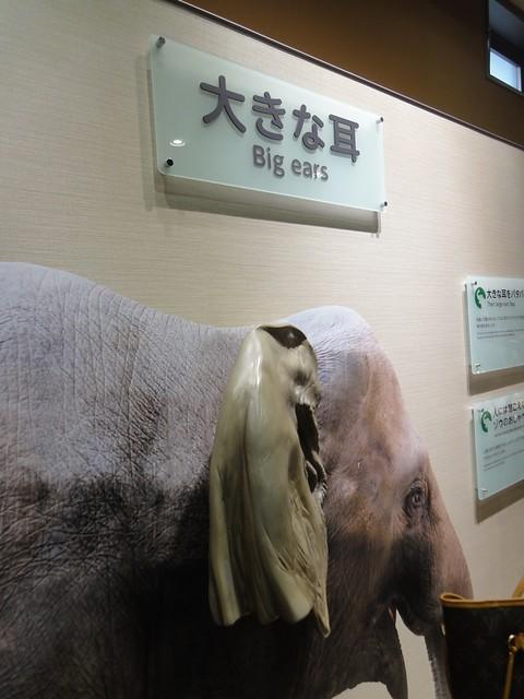 こんな風にゾウの耳(の模型)が触れるようになっています。|名古屋市東山動植物園