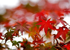 Autumn is back (salar hassani) Tags: autumn is back
