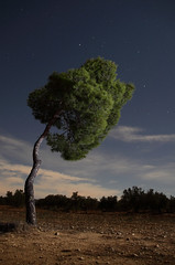 Encorvado (Antonio Martnez Toms) Tags: nocturna pino yecla pinushalepensis