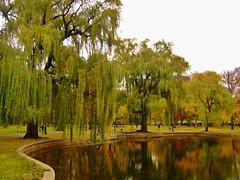 Public Garden Pond (evanlochem) Tags: park new november autumn england fall public boston architecture america garden pond massachusetts united hill historic foliage states beacon
