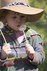 IMG_7860 (Tina Stanley) Tags: family people nature oregon photography state things dandelion sunhat makeawish descriptive paigesprings
