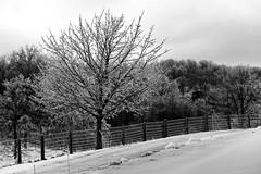 Ice show (Flapweb) Tags: ice fence mono vermont