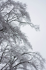 Ice Storm (Jessica Matteazzi) Tags: trees winter ontario canada ice frozen forksofthecredit