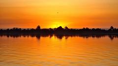 Sunset on the Nile (flowerikka) Tags: sunset sky orange nature water palms egypt nile reflektion