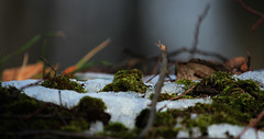 Moos (gutlaunefotos ☮) Tags: schnee moos