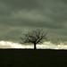 Lone tree flight