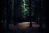 Light (Antonio Carrillo (Ancalop)) Tags: trees light españa luz forest canon landscape spain paisaje bosque euskadi paisvasco arbors antoniocarrillo vsco 5dmarkii ancalop vscofilm