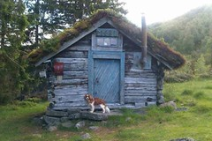 my dog (toinikvamme) Tags: trip trees dog mountain tree skye green nature animal norway cabin cavalier stordal naturelover flickrandroidapp:filter=none