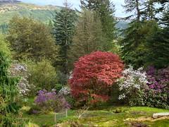 Shrubs (goforchris) Tags: spring argyll botanicalgardens shrubs benmoregardens