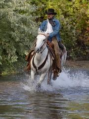 IMG_6319 (blackhawk32) Tags: horses horse cowboys cowboy shell wranglers wyoming cowgirl cowgirls rivercrossing wy wrangler horserunninginwater hideoutlodge