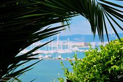 A palm tree covering the sailing boats. (Mike Dirhalidis) Tags: greece macedonia thessaloniki timeless skg makedonia kalamaria greeksea  coffeeinfrontofthesea
