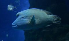 A Strange Fish (pringle-guy) Tags: fish london animals nikon sealife londonaquarium