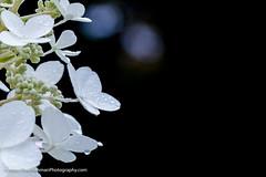 20161001-IMG_3083.jpg (Paul Henman) Tags: toronto torontophotowalks topwwwpw2016 photowalk httppaulhenmanphotographyca ontario canada 2016 topw worldwidephotowalk2016 wwpw2016