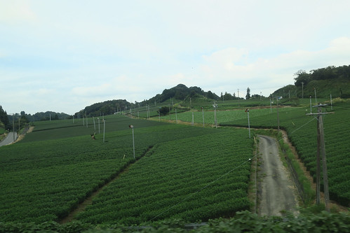 Tea Farm from the Bullet Train
