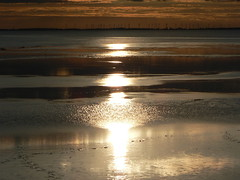 evening tints at Dollart Bay (achatphoenix) Tags: sunset coucherdusoleil dollart dollard dollartbay dollartbusen nordsee northsea water wasser waddensea wattenmeer watt reiderland reflection beautyofwater