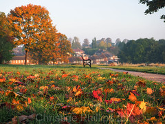 A walk in the park on an Autumn morning (Christine's Observations) Tags: autumn red orange green beautiful fall summer winter london halloween colourful christinephillips season seasonsinengland england unitedkingdom greatbritain