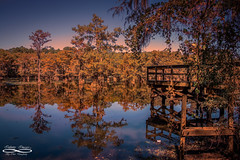 Sunset on the BayouOctober 23, 2016.jpg (outlaw.photography) Tags: aurumn bayou caddolake chrisdaugherty cypresstrees infinityimages landscape light orangs photography rustic sky swamp texas trees water nature outlawphotography sunset