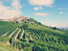 Enjoy the view... (France-) Tags: lamorra italy vineyards vignoble italie vert 355 barolo landscape paysage europe piedmont