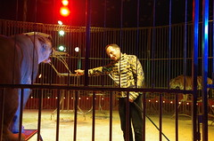 IMGP4809 (kanakacatherineb) Tags: cirque venise narbonne landri 2016 lions chameaux chiens dompteurs jongleur gymnaste