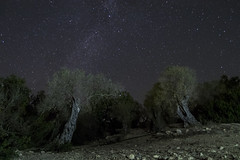 Olive Trees Under Milky Way (mr.akkanat) Tags: astrophotography astrophoto ancient amazing nature cyprus milkyway stars starry sky landscape landscapes