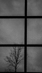 Cloudy with a 100% chance of moire. (Chris Huddleston) Tags: lines moire geometric cloudy rectangles division bw blackandwhite squares tree