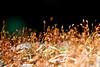 Parque Nacional Desierto de los Leones (Pablo Leautaud.) Tags: suelodeconservacion mexico ciudaddemexico cdmx pleautaud naturaleza nature parquenacional desiertodelosleones