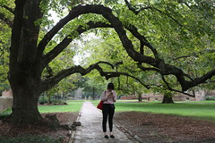 A walk amongst the trees (William & Mary Photos) Tags: williamsburg va usa williamandmary wm williammary wandm collegeofwilliamandmary collegeofwilliammary